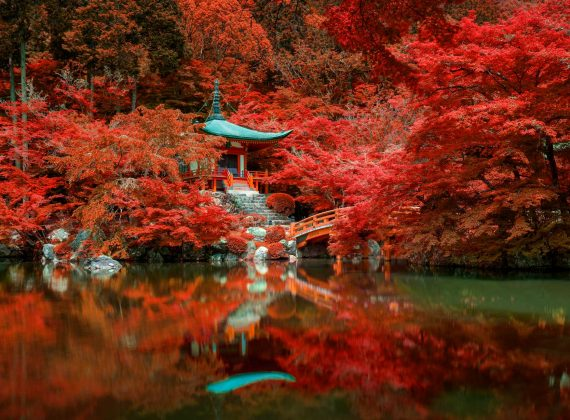autumn-foliage-at-daigo-ji-temple-kyoto-japan-DNMX6GE.jpg